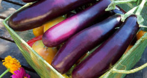 Why Eggplant is One of the World's Best Foods