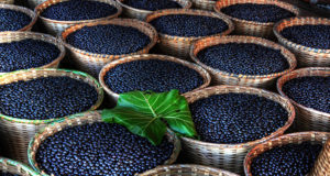 World's Healthiest Foods: the Acai Berry