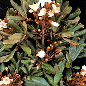 Herbal Health LLC EnhanceRx Male Enhancement Properties
